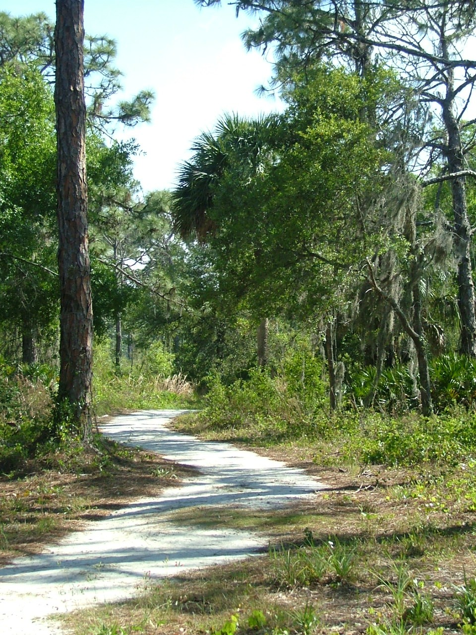 Walking, hiking trail through the Manasota Scrub Preserve