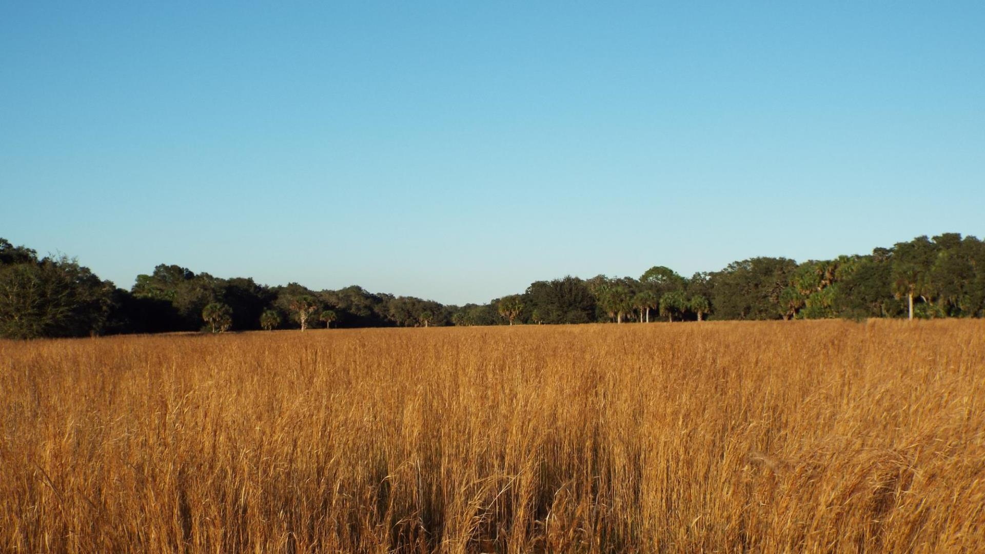 Big Slough Basin - Fall Grasses