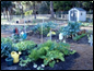 small home size vegetable garden