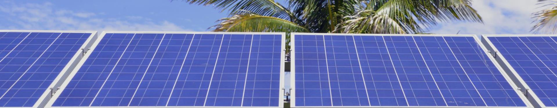 Solar Panels and palm tree