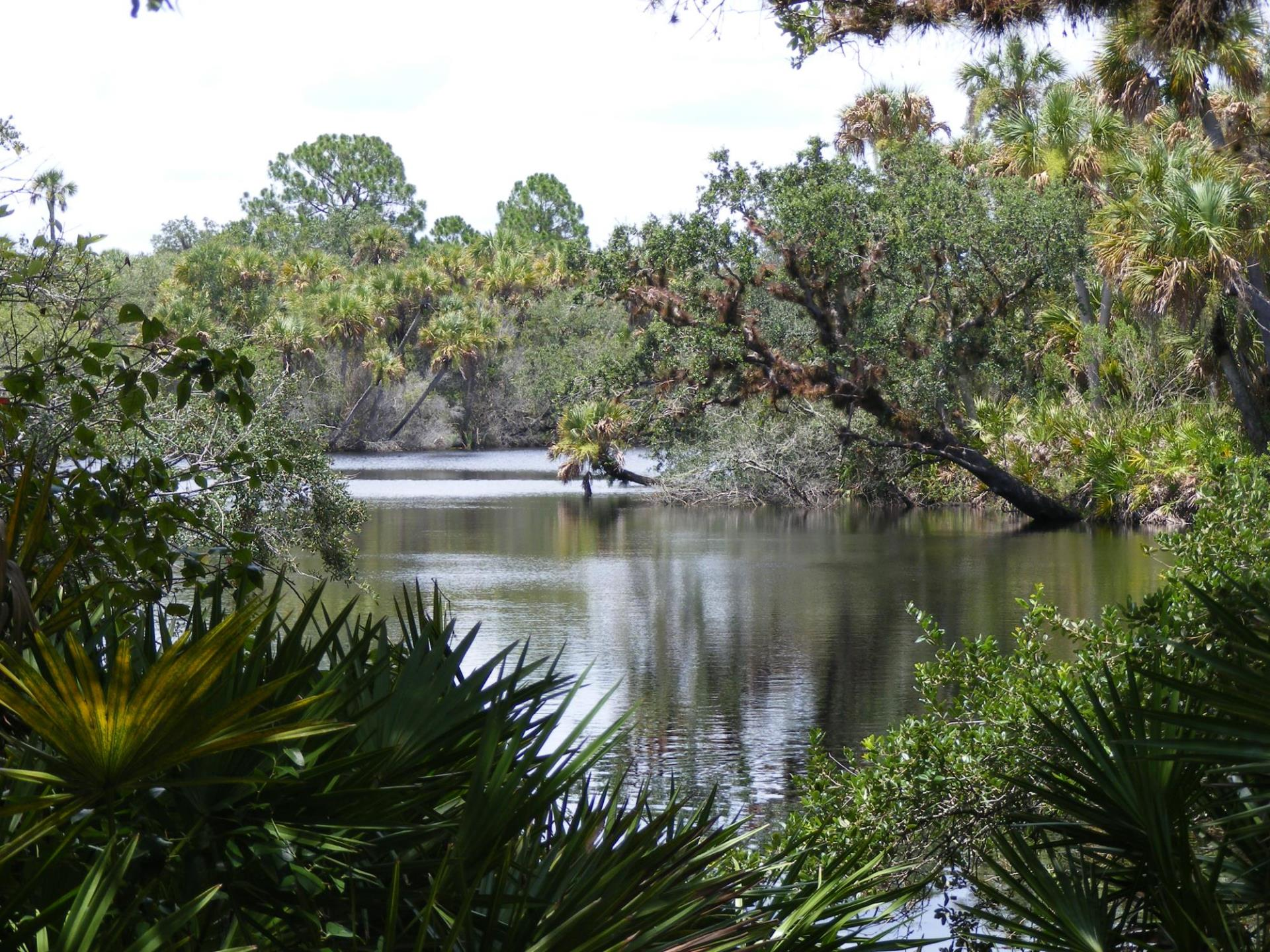 Myakka River at Jelks