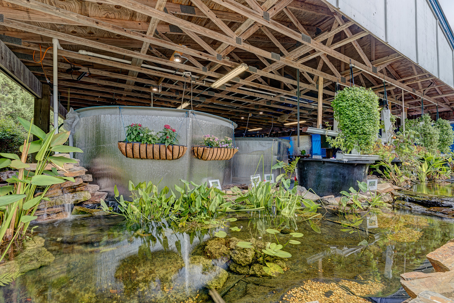 koi pond with reflection off of water, tanks with fish in the rear of the image