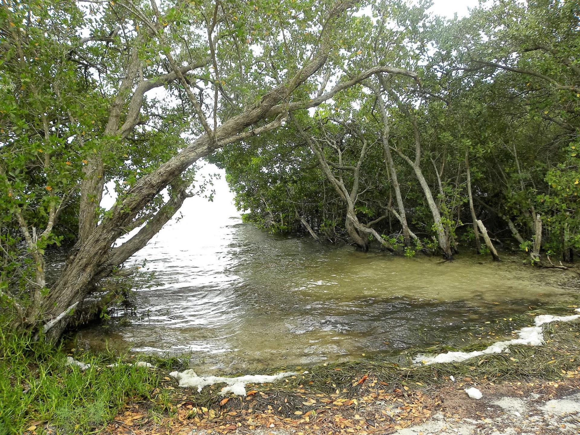 Blind Pass mangroves