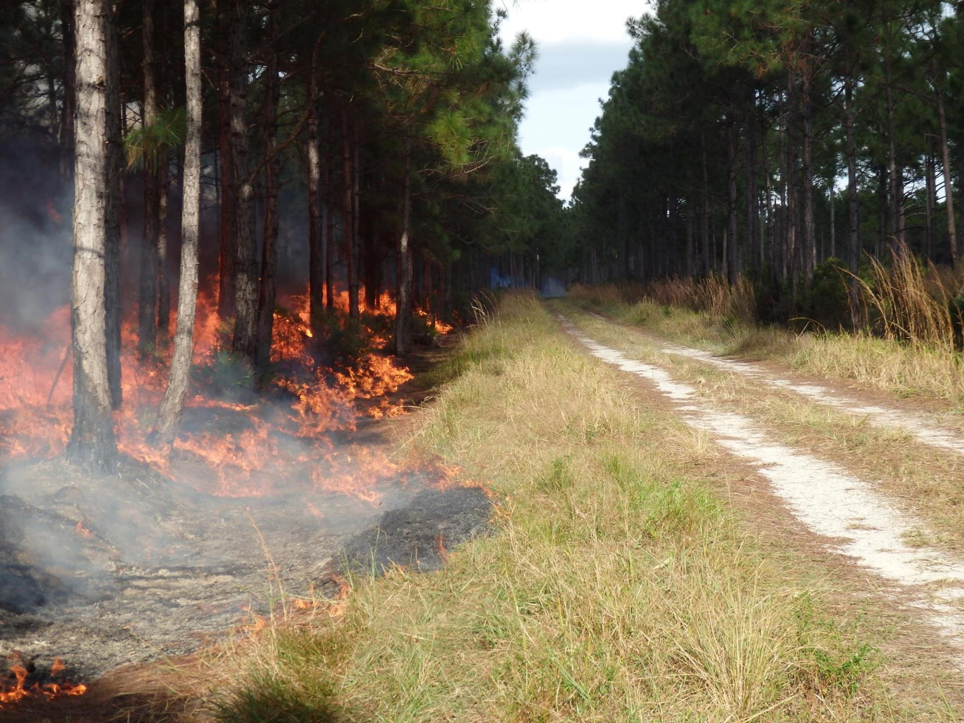Control burn along a rural road